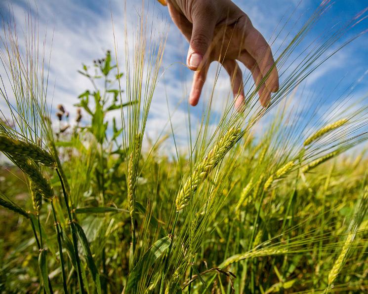 Инвестиции всельское хозяйство выросли на2,4%
