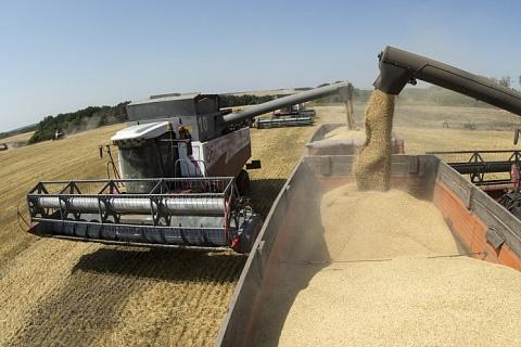 Цены на пшеницу начали падать на фоне старта уборочной кампании