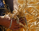 Госпрограмма развития сельского хозяйства будет улучшена
