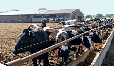 МСХ создаст 50 семейных ферм