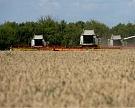 Сбор пшеницы вырос на четверть и почти достиг 30 млн тонн