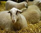 В Самарской области занялись альтернативным животноводством