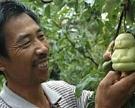 Китай спонсирует развитие сельского хозяйства
