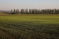 Погода благоприятствует урожаю зерна в Центре и на Юге