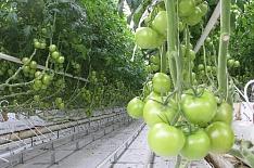 «Эко-культура» будет управлять теплицами площадью до 250 гектаров в Китае
