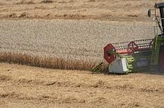 Минсельхоз повысил прогноз урожая зерна