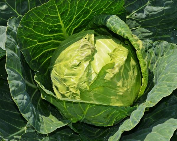 Сектор овощеводства прибавил всреднем 36%