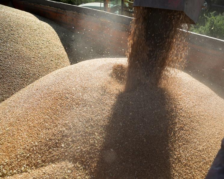 Минсельхоз ожидает снижения урожая зерна на25 млн тонн