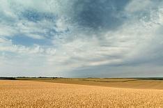 Ущерб аграриев из-за погодныхЧС приблизился к 9 млрд рублей