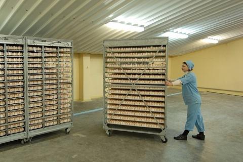 «Черкизово» покупает птицефабрику в Белгородской области
