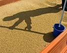 Зерновые интервенции пройдут до 1 сентября без биржевых торгов