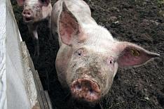 Мясная отрасль просит пересмотреть экологические требования для предприятий