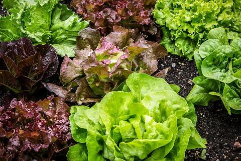 «Выборжец» утроит производство салатов за 8 млрд рублей