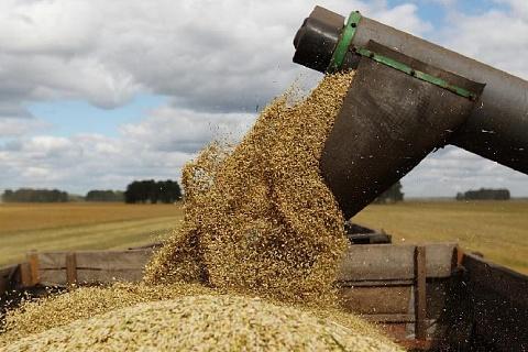 Россия сохранит первенство в мировом экспорте пшеницы