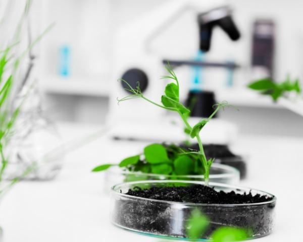 Найден новый механизм защиты растений отстресса