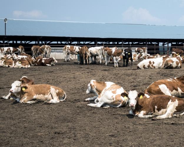 ВТюменской области производство молока выросло на22%