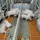 «АгроПромкомплектация» запускает новые свинокомплексы