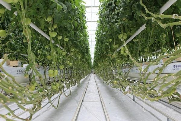 Крупнейшие тепличные хозяйства России