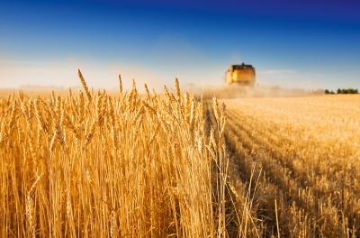 Урожай зерновых— снова трехзначный