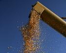 Экспорт продовольствия из России вырос на 7% благодаря продажам зерновых