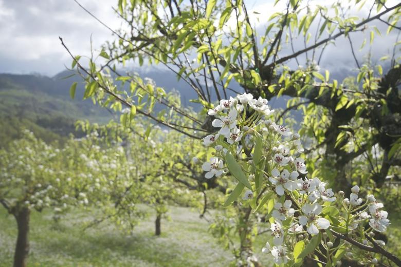 Садоводство— доходный бизнес