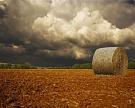 Сильные дожди замедляют темпы заготовки кормов