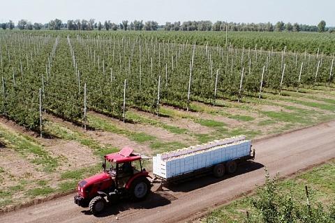 Земельный банк топ-5 латифундистов превысил 3,8 млн гектаров