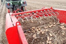 Сбор товарного картофеля в этом году вырастет