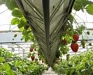 ВМосковской области вближайшие два года построят 80 гектаров теплиц