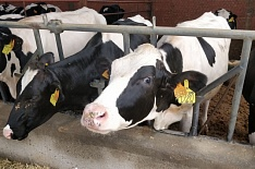 Агрохолдинг Владимира Евтушенкова расширяет производство молока