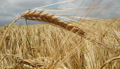 Посевы выросли на2%