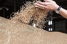 Запасы пшеницы на 35% меньше прошлогодних