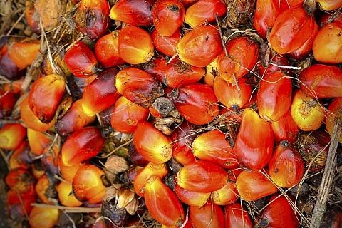 Госдума одобрила повышение НДС на пальмовое масло