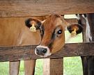 «Молвест» заморозил строительство молочных комплексов