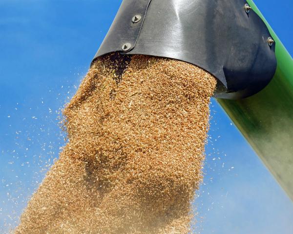 Вгосударстве Украина намолочено практически 38 млн. тонн зерна