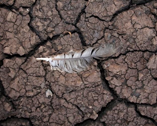 Изменение климата угрожает Российской Федерации сокращением ВВП— руководитель Минсельхоза