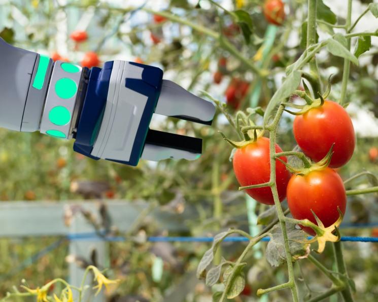 Хозяин теплицы. Перспективы роботизации и автоматизации тепличного овощеводства