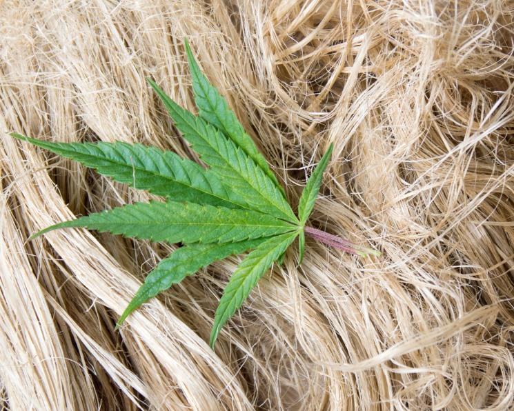 Производство по переработке конопли можно ли выращивать марихуану в голландии