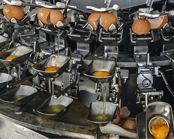 Ниша яичных продуктов остается свободной