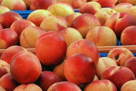 Россельхознадзор запрещает ввоз фруктов из Китая