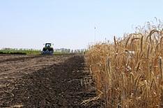 «Мираторг» займется производством семян