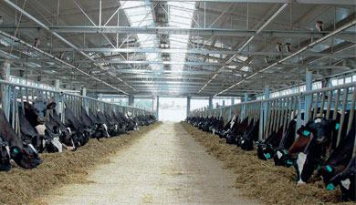 Пять новых ферм завосемь лет