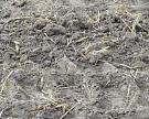Сельское хозяйство Забайкалья прибавило 1%