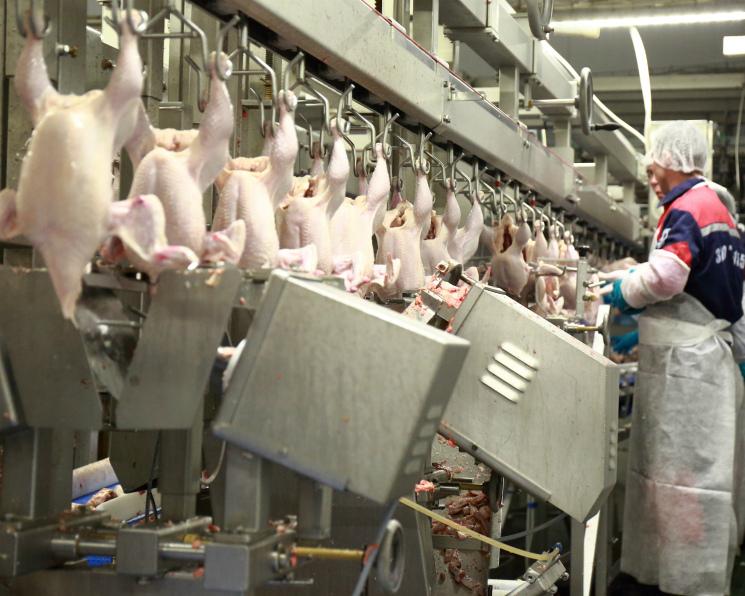 Производство мяса птицы превысит 4,9 млн тонн