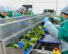 «Белая дача» возобновит картофельный проект в Липецке в течение месяца