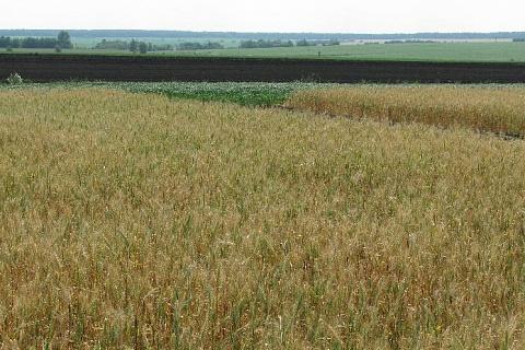 Минсельхоз намерен создать единую систему прослеживаемости зерна