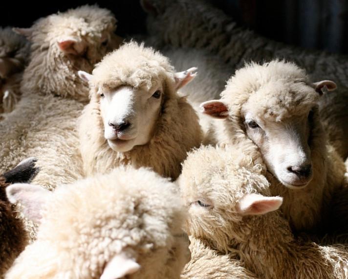 «Дамате» покупает завод по переработке баранины
