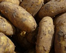 «Магнит» покупает липецкого производителя картофеля