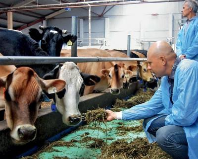 «АгриВолга» начала видеотрансляцию с фермы