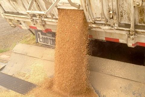 Интервенции на рынке зерна могут начаться с 13апреля